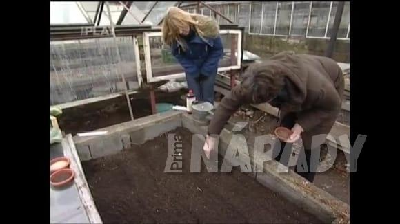 Jak správně předpěstovat zeleninu v pařeništi