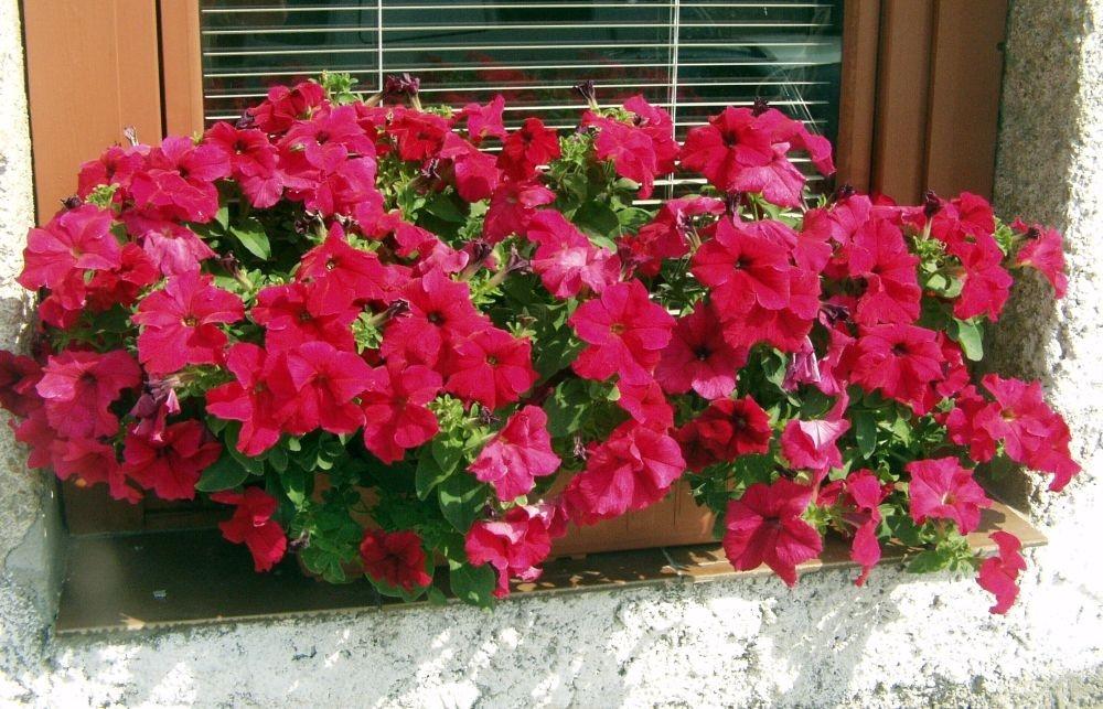 Pro balkony plné květů