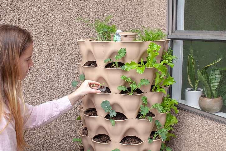 Vertikální výsadba zeleniny
