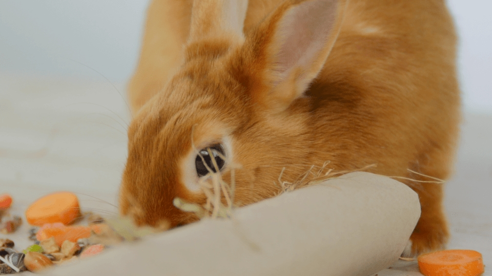 Jak hravě nakrmit králíčka: Mrkev v míčku i mezi kartony