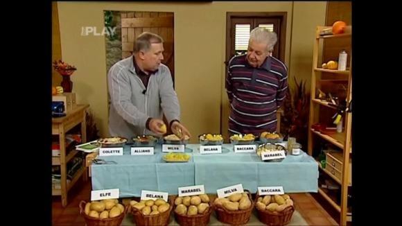 Odrůdy brambor na bramborový salát