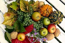 Kam na výlet: Podzimní náruč je bohatá, vydejte se na dýňobraní, zelobraní nebo vinobraní
