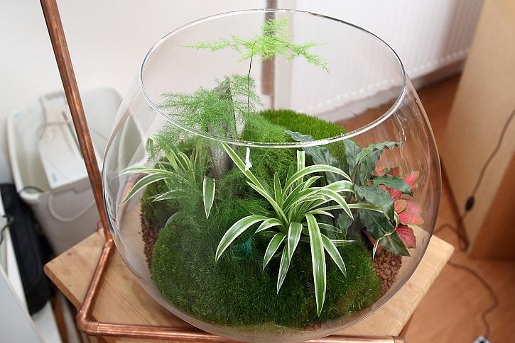 Zelenec v kulatém akváriu