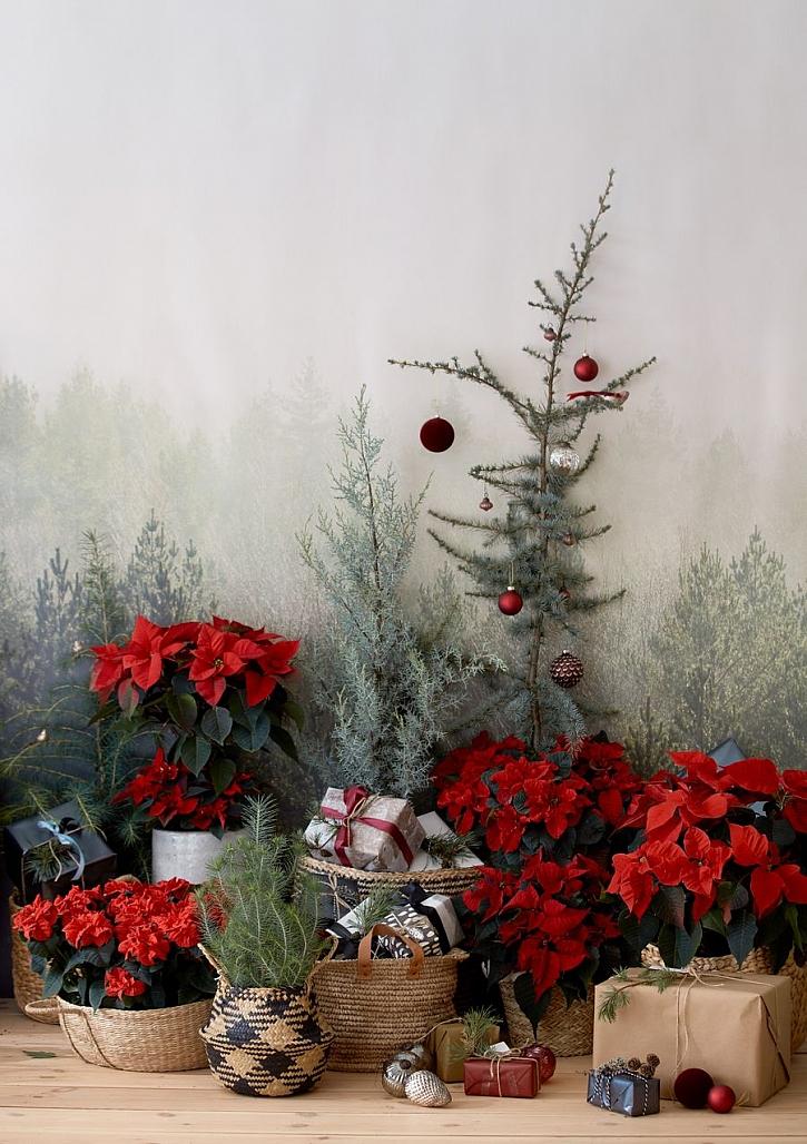 csm_2020_poinsettia_01000_Christmas_Green_Spirit_24_2ff62cbf8a