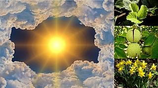 Předpověď počasí na druhý víkend vzáří: Víme, co dělat na zahradě!