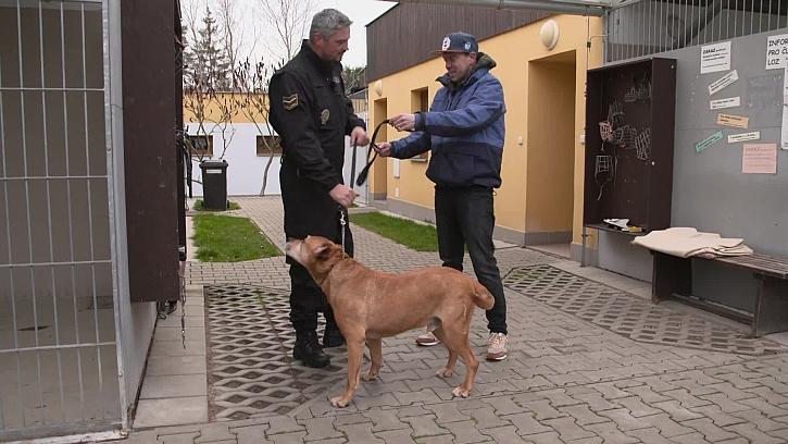 Láďa venčil psa z útulku