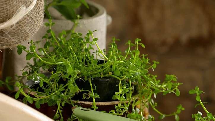 Zelená rostlina