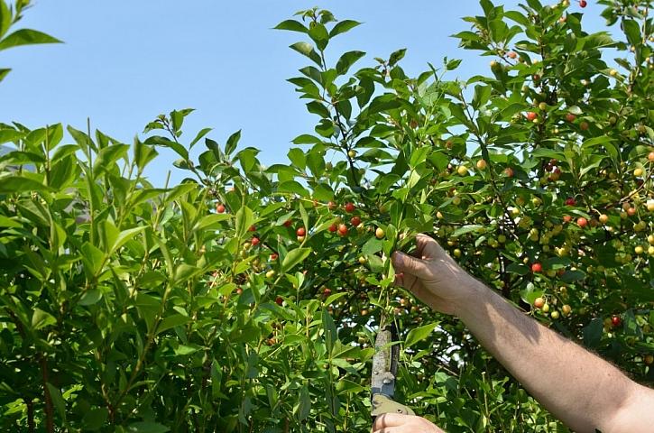 Seříznutím a prosvětlením keřů zahradu omladíme