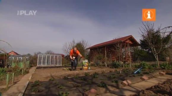 Ekologické pěstování rostlin