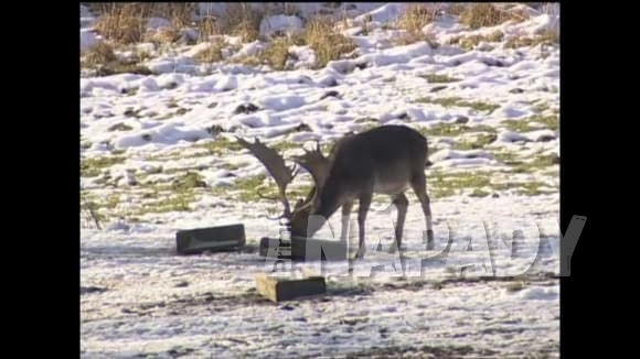 Přikrmování zvěře v oboře v zimě