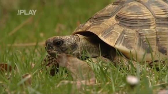 Jak pečovat o želvu