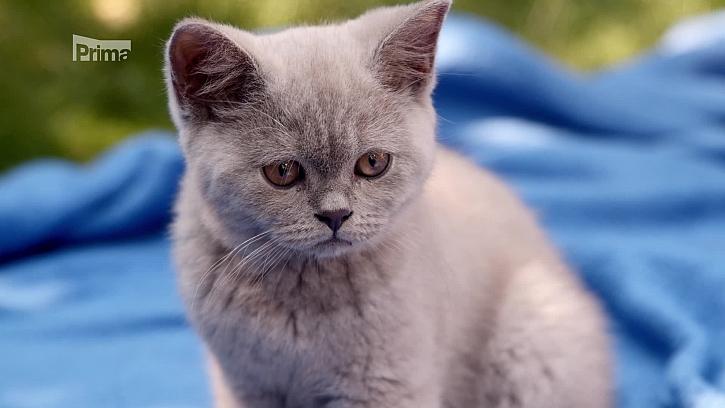 Koťata je potřeba v určitém věku naočkovat proti celé řadě chorob (Zdroj: Proti kterým chorobám naočkovat koťata)
