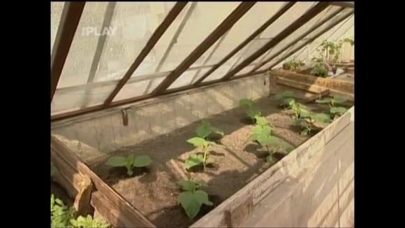 Mobilní pařeniště ve skleníku