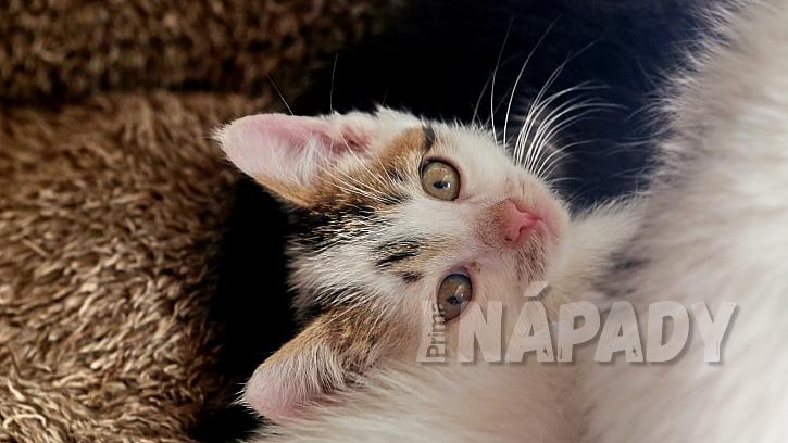 Zatoulanou kočku každopádně musíte odčervit a odblešit