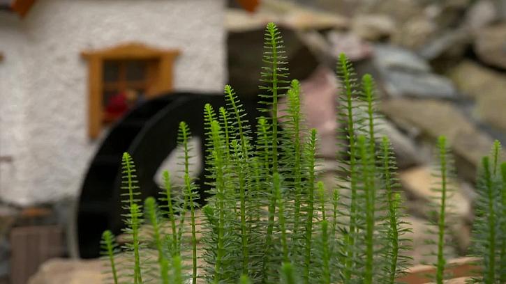Rostliny osázené kolem mlýna