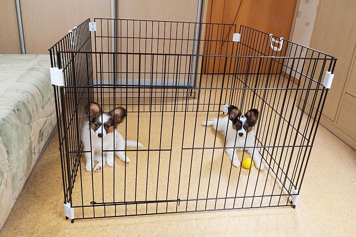 Jednoduchá psí klec jako ohrádka pro štěňátka (Zdroj: Depositphotos)