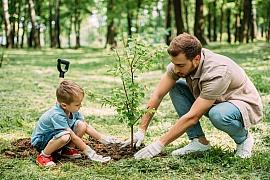 Výsadba stromků podle půdní značky