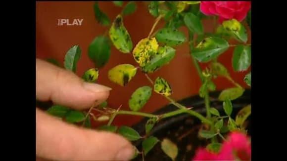 Podzimní choroby rostlin