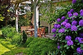 Jaké květiny pořídit pod pergolu, aby byla rozkvetlá po celou sezónu?