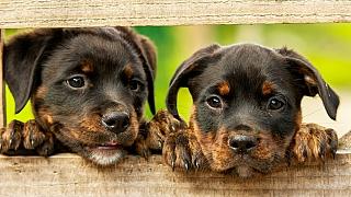 Tušíte, kolik vás stojí pes ročně? Možná se budete divit!