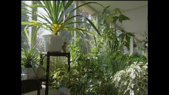 Lapače škůdců v zimní zahradě