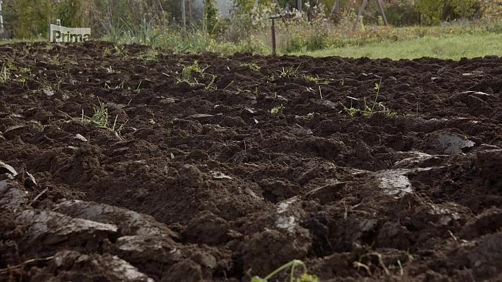 Jak docílit zúrodněného pozemku? (Zdroj: Podzimní zpracování a zúrodnění pozemku)