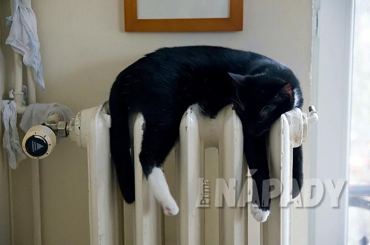 Pelíšek pro kočku: nepohodlí nevadí, hlavní je teplo