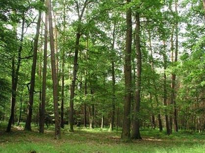 Zákazníci Viledy pomohli k výsadbě více než 50 000 stromů
