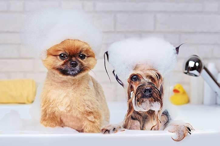 Psi ve vaně