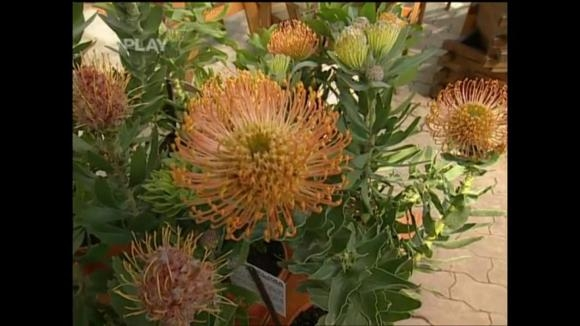 Netradiční balkonové rostliny