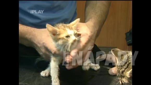 Jak pomoct zatoulanému zvířeti