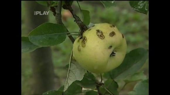 Choroby a škůdci rostlin
