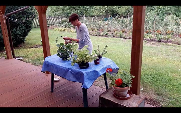 Ubrousky na pokojové rostliny