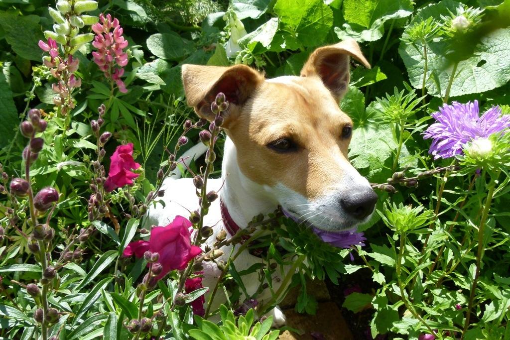 Zahrada pro psa: Ani ten nejvychovanější netuší, že vzáhoncích se nehrabe