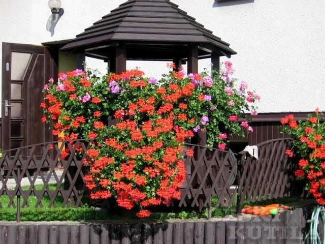 Rozkvetlá studna a květy magnólie
