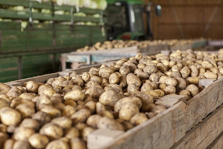 Uskladněné brambory
