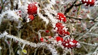 Leden v lidové meteorologii: Na Nový rok déšť, na Velikonoce sníh
