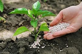 Živiny pro kvalitní půdu a jejich úloha