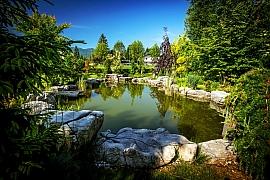 Jak odstranit zelenou vodu v zahradním jezírku