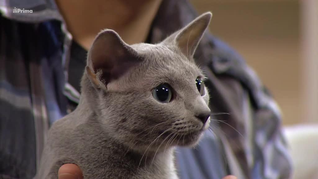 Nemoci koček