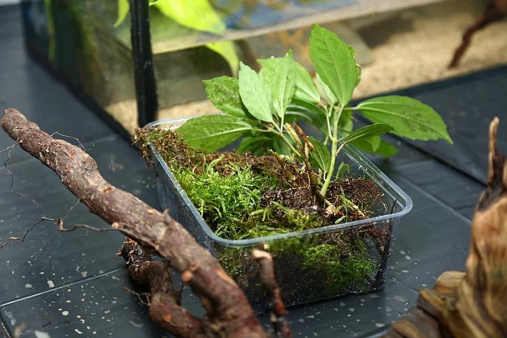 Vybírejte rostliny, které vydrží velmi vysokou vzdušnou vlhkost
