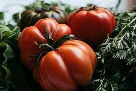 Vypěstujte si odrůdy obřích rozměrů