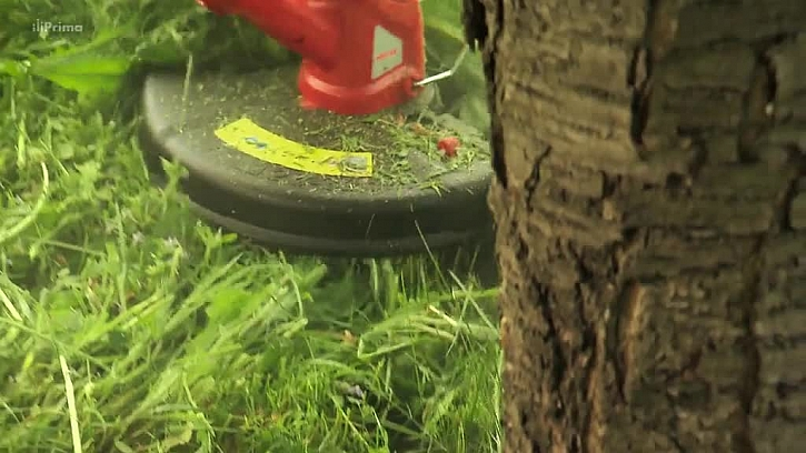 Strunový vyžínač kolem stromu