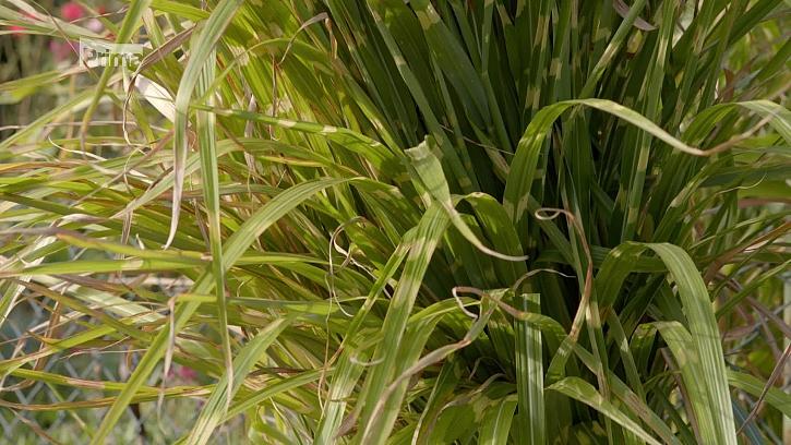 Traviny na podzim