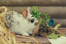 Domácí králík a jak se o něj starat