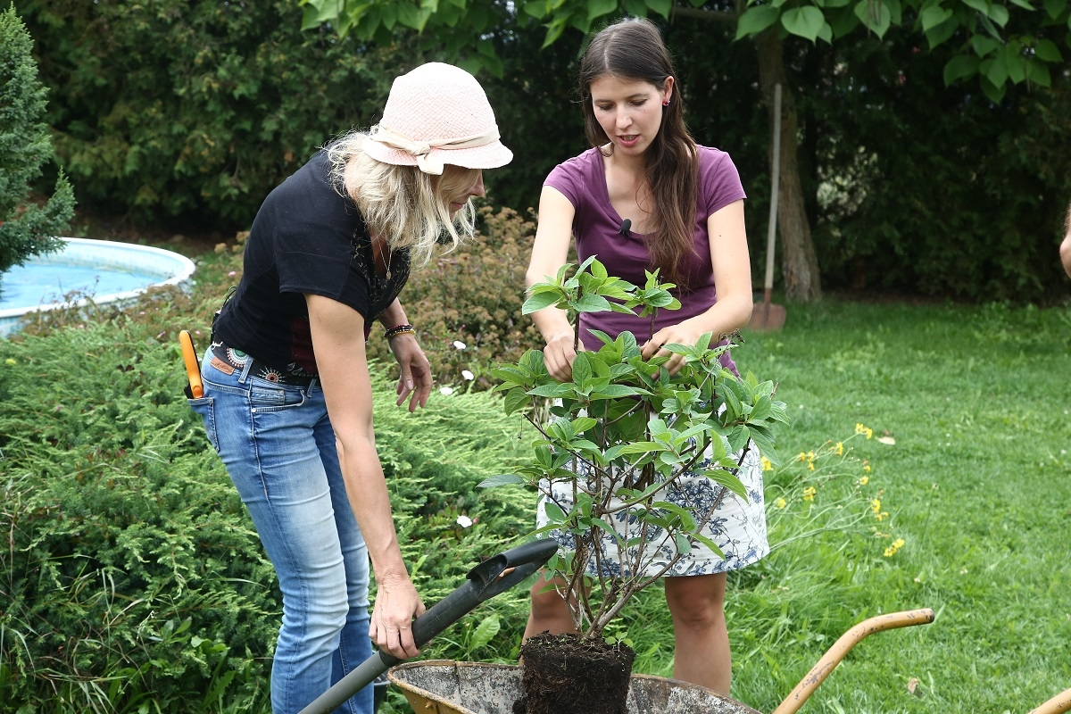 Jaké jsou výhody podzimní výsadby?