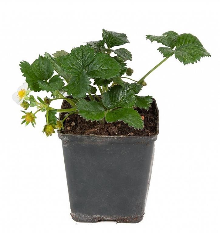 Správná výživa rostlin pomůže k veliké úrodě