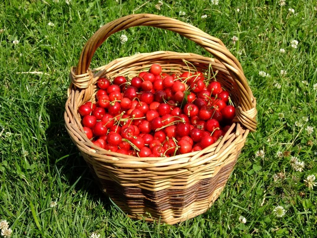 Péče o plodiny a sklizeň ovoce