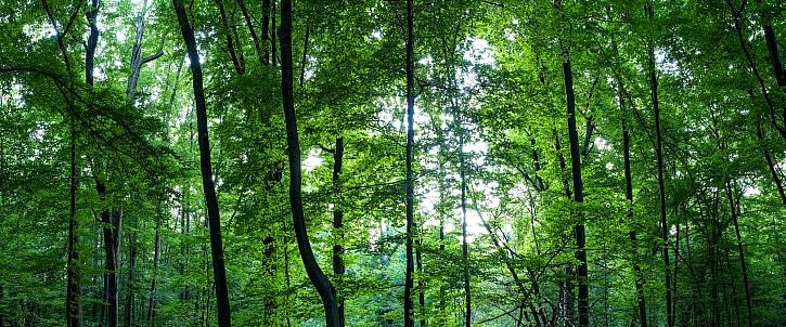 Lesní panorama