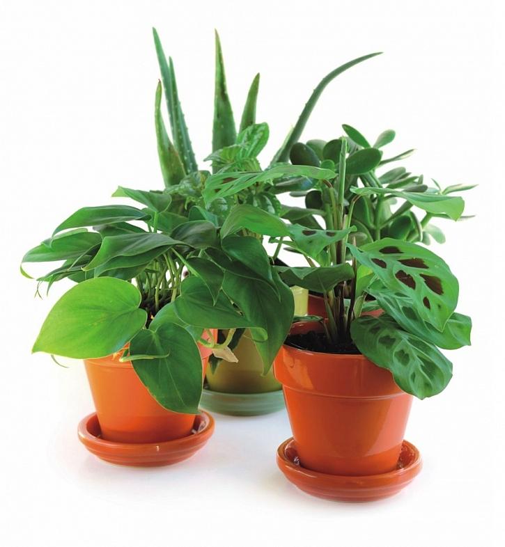 Vitality Komplex: Jarní péče o pokojové rostliny